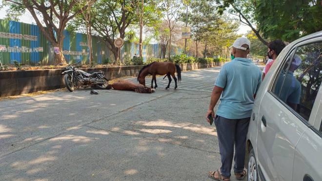 भरधाव धावणाऱ्या घोड्यांचा व बाईकस्वाराचा अपघात, घोडा जागीच ठार तर बाईकस्वार पोलीस जखमी
