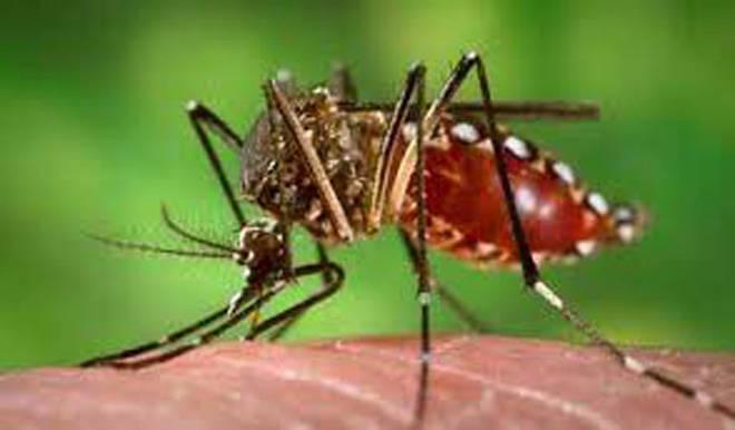 मलेरिया नियंत्रणात पण इतर आजाराच्या रुग्णांची संख्या जैसे थे