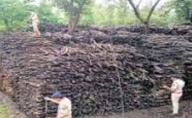 खैराच्या अवैध साठ्यावर वन खात्याची धडक कारवाई, ३३ हजारांचा माल जप्त