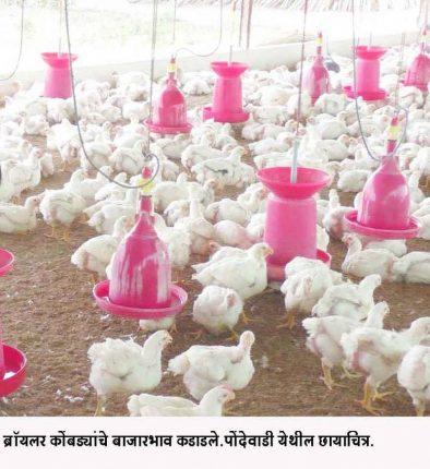 ब्रॉयलर कोंबड्यांचे बाजारभाव कडाडले