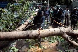 वित्तहानी टाळण्यासाठी वृक्षांचा बळी