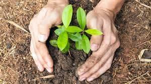 वृक्षारोपणासाठी महापालिका क्षेत्रात जमिनी नाहीत, आता वृक्षारोपणासाठी जागा द्या