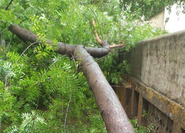 निसर्ग चक्रीवादळामुळे वित्त व जीवितहानी नाही – डोंबिवलीत १०-१२ झाडे पडली