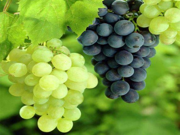 द्राक्ष खा मस्त राहा…पाहा काय आहेत फायदे ?