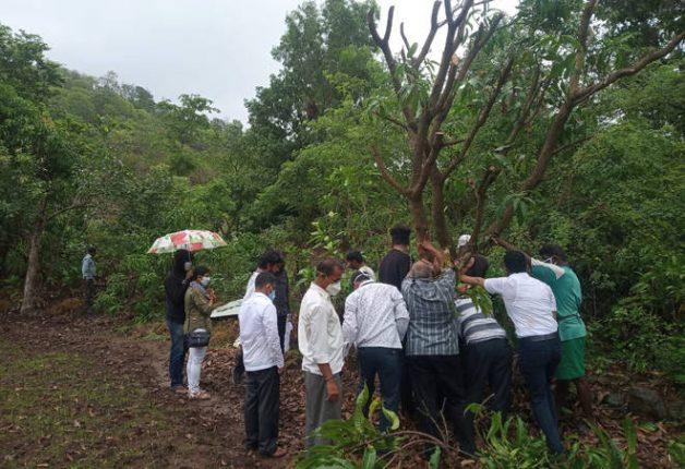 चक्रीवादळात पडलेल्या झाडांना मिळणार संजीवनी – डॉ. राजेश मांजरेकरांनी दाखविले प्रात्यक्षिक