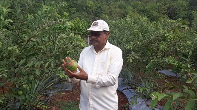 'त्या' शेतकऱ्याने दाखवून दिली कोकणातल्या शेतकऱ्याची आव्हानांना तोंड देत पुन्हा उभे राहण्याची जिद्द