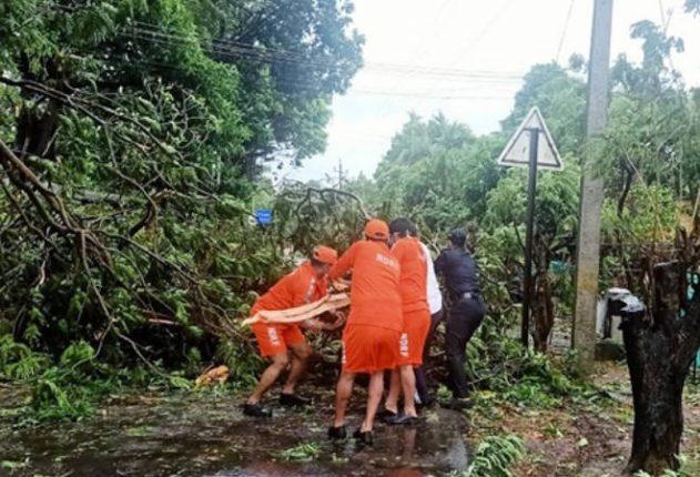 चक्रीवादळामुळे श्रीवर्धन शहरात पडलेल्या झाडांच्या फांद्या व पालापाचोळा त्वरित न उचलल्यास दुर्गंधी पसरण्याची शक्यता