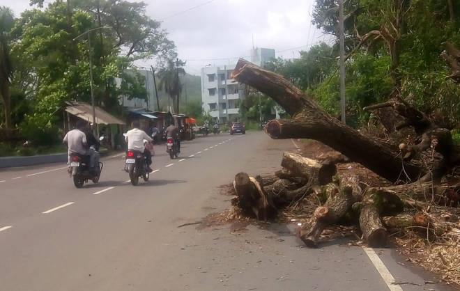 औद्योगिक परिसरातील अंतर्गत रस्त्यावर झाडे पडल्याने अपघाती परिस्थिती