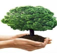 अमरावती येथे उच्चशिक्षित कावडकर यांनी केला झाडे लावण्याचा संकल्प