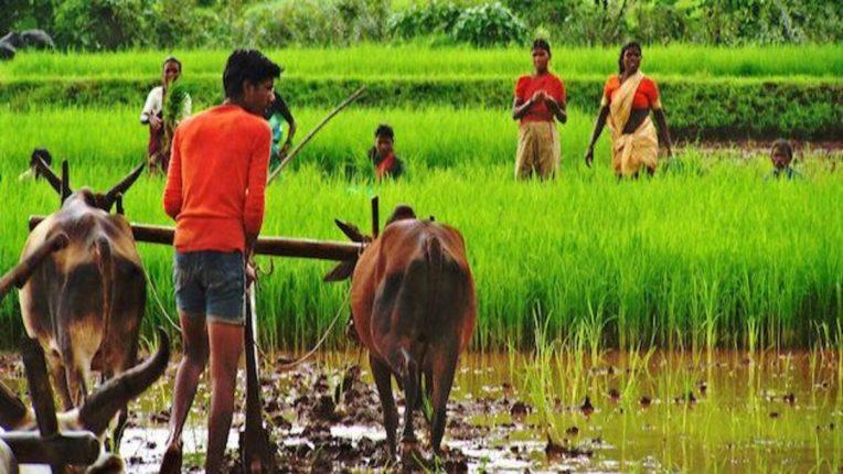 राज्याच्या कृषी पर्यटन धोरणाला मान्यता