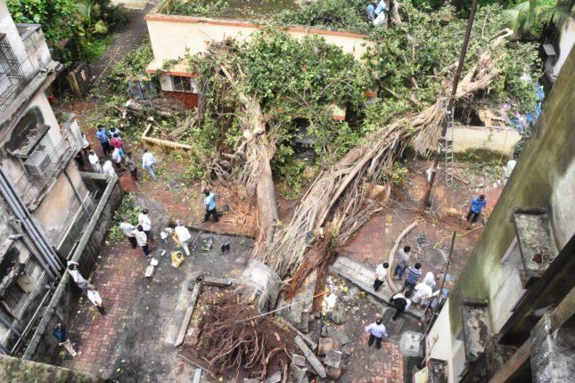 कल्याणात १७० वर्ष जुना वटवृक्ष उन्मळून पडला