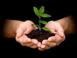 अबब ! महानगरपालिका एक वृक्ष खरेदीसाठी मोजणार तब्बल सव्वा पाच लाख रुपये
