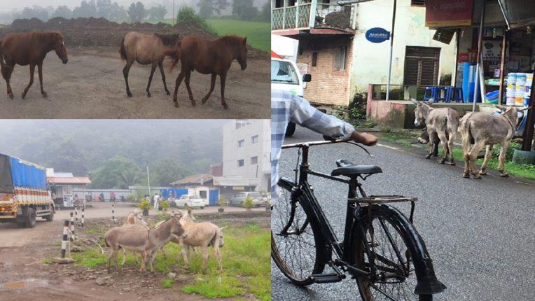 donkey in mahad road
