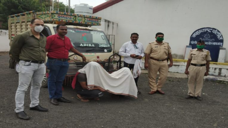 Two charged in illegal transport of bullocks in Borgaon Maunju