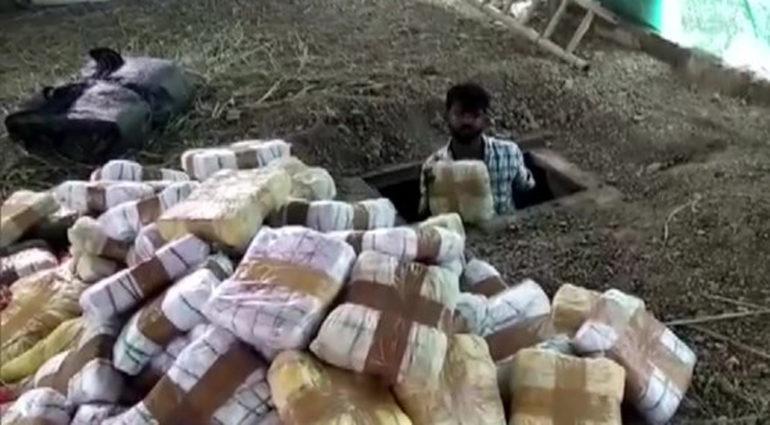 जमिनीखाली साठवला होता १ हजार ३५० किलो गांजा, पोलिसांनी केला जप्त