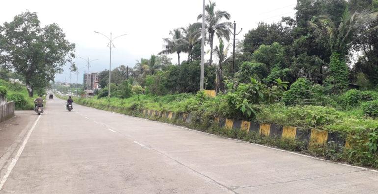 लाखो रुपये खर्च करुन म्हसा रस्त्यालगत लावलेली झाडे गायब