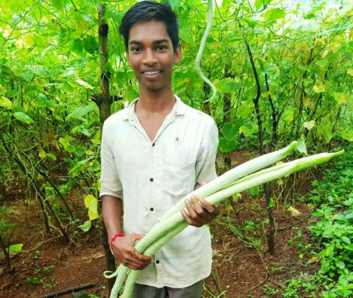 तलासरीतील आदिवासी युवकाने फुलवला भाज्यांचा मळा