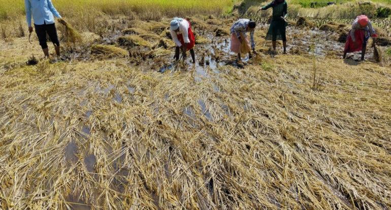 kasara crops