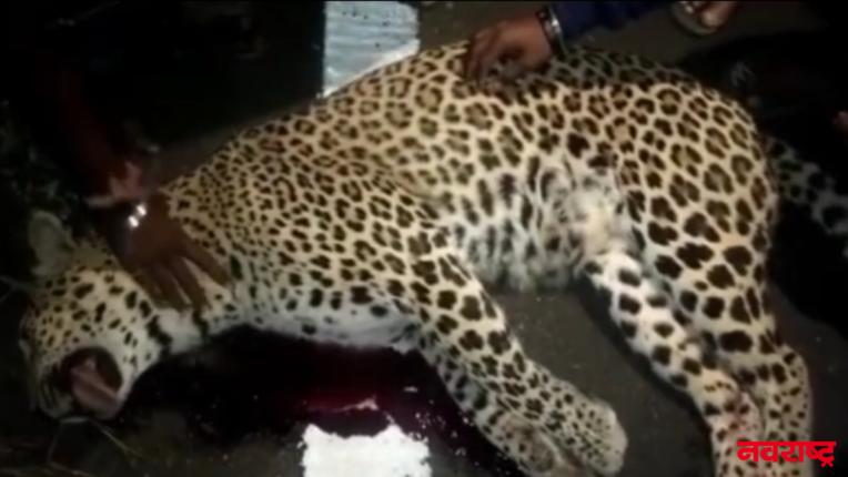 leopard died in warora