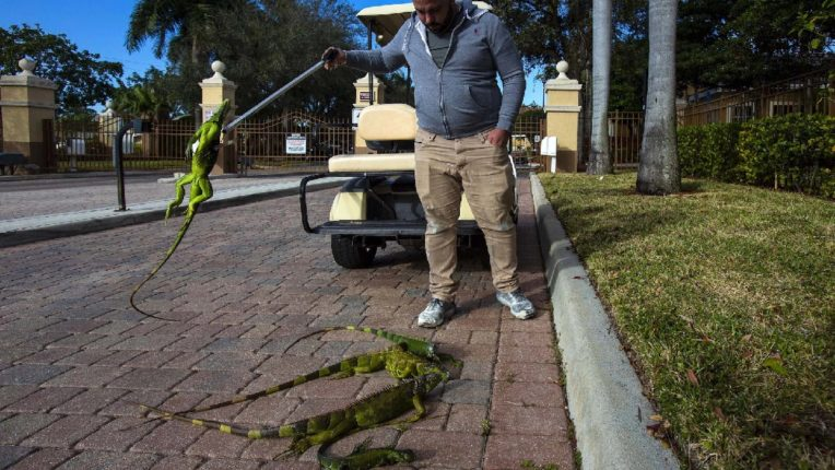 Warning to citizens as it rains, a strange crisis on Florida residents