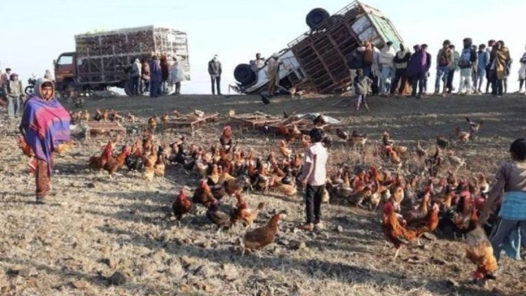 Tempo accident of chickens in Madhya Pradesh Loot of 300 hens