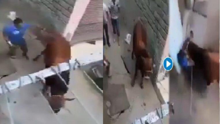 …या माणसानं गाईचा केला तिरस्कार, अन् गाईनचं केला माणसाचा सत्कार ; पाहा व्हिडिओ