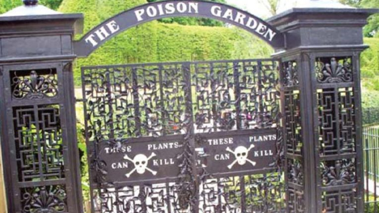 पुढे धोका आहे… 'या' बागेत एकट्याने शिरकाव केल्यास पुन्हा जिवंत येणे कठीण, काय आहे या मागचं रहस्य ?