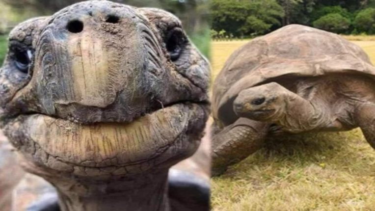 meet this tortoise who most aged animals planet