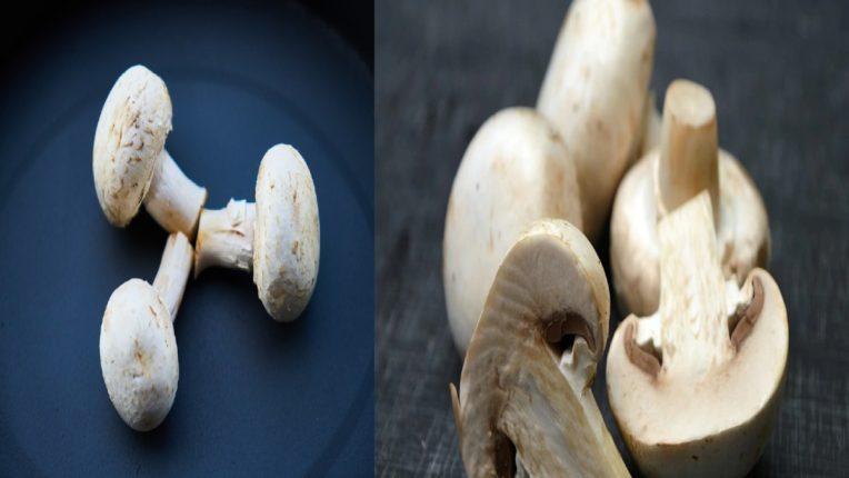 mushrooms benefits reasons to eat this versatile veggie regularly