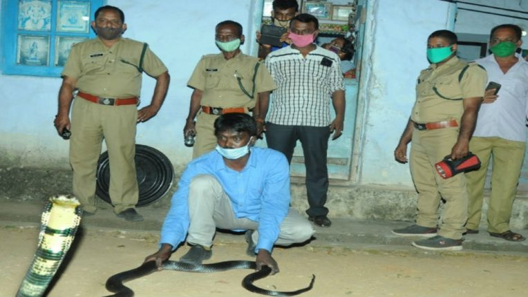 kerala government imparts snake catcher training jails and fine for 7 years for unlicensed snake catchers