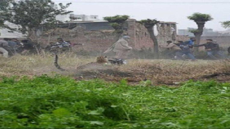people salekasa gondia found baby leopard in farm