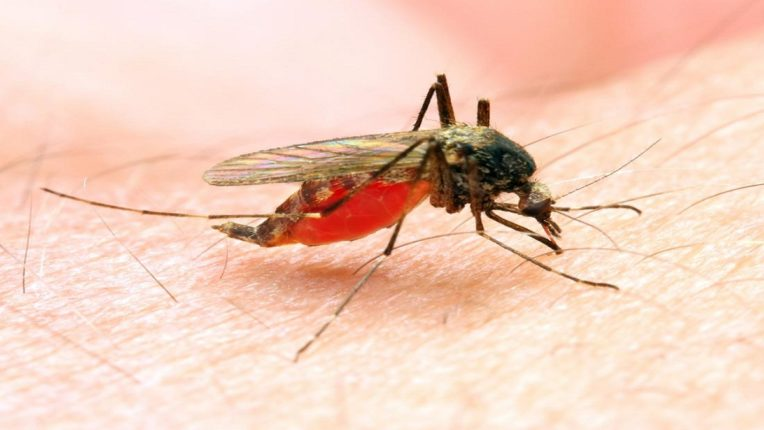 The corona vaccine will be followed by the malaria vaccine; One child dies every 30 seconds