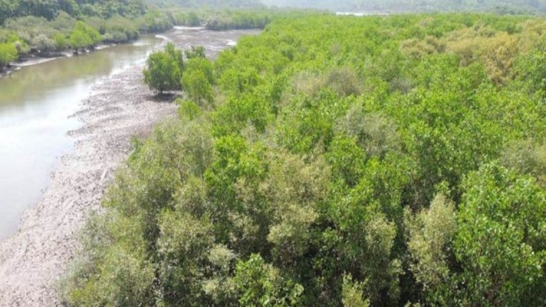The mangroves started to grow again!