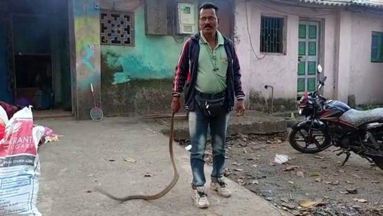 snake in kalyan