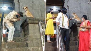 आता हेच बघायचे बाकी होते ; 'या' मंदिराच्या बाहेर चक्क कुत्रा देतो भाविकांना आशीर्वाद; व्हिडीओ एकदा पहाच