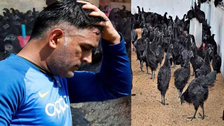 …अरे माझ्या कोंबड्या? क्रिकेटपटू महेंद्रसिंह धोनीला बर्ड फ्लूचा फटका