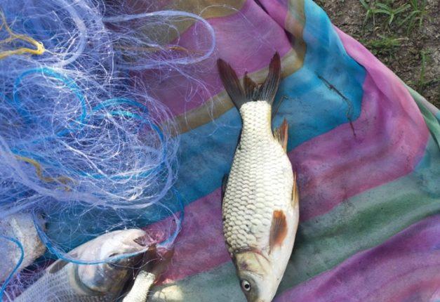 अजब चोरीची चर्चा ; नायगव्हाण येथील पाझर तलावातून ४ ते ५ लाख किमतीची मासे चोरी