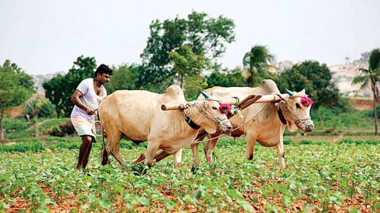 मान्सूनचे वारे कमकुवत; देशभरात पावसाची शक्यता मावळल्याने शेतकऱ्यांना कृषी विभागाचे आवाहन