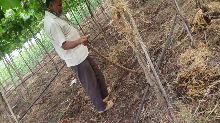 Snake bite kills Sarpamitra in Sangli