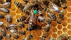 धक्कादायक! कोंबड्यानंतर आता शेकडो मधमाशांचा अचानकपणे मृत्यू ; नागरिकांमध्ये भीतीचे वातावरण