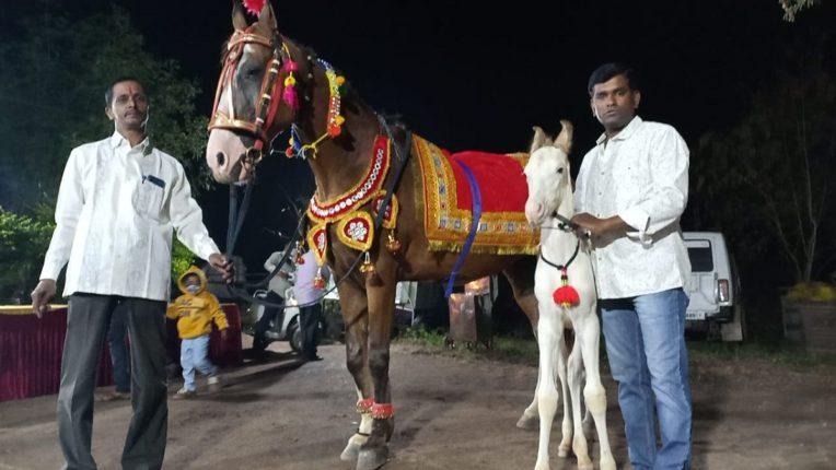 Naming ceremony of 'Kalyani' horse passed in Sangli