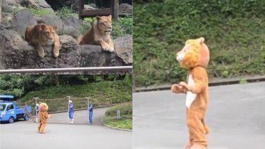Viral Video : जपानच्या प्राणिसंग्रहालयात खऱ्या वाघांसमोर जेव्हा खोटा वाघ बनून आली एक व्यक्ती, पाहा पुढे काय झाले