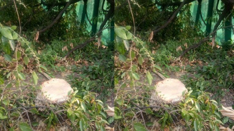 वन वसाहतीतून चंदनाची तस्करी; विष्ठा करून झोपडपट्टीमार्गे काढला पळ