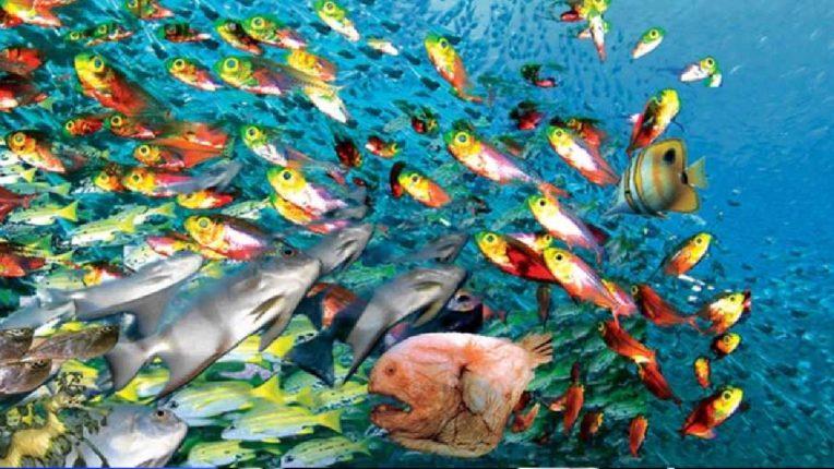 वातावरणाच्या बदलामुळे माशांचा होतोय अधिवास, सागरी जिवांवर मोठा परिणाम होण्याची शक्यता