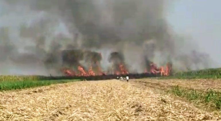 आगीत ४० एकरातील ऊस खाक ; कामेरीतील घटना , शेतकऱ्यांचे काेट्यवधीचे नुकसान