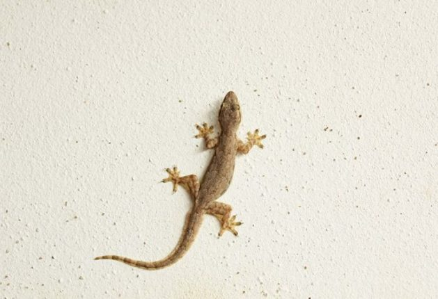 lizard found at dinner at hotel; Bouncers beat the complaining youth