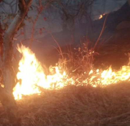 वाई तालुक्यातील सहयाद्रीच्या डोंगररांगांना अज्ञाताकडून आगी लावण्याचे प्रकार