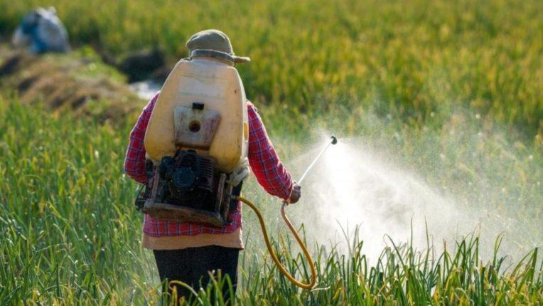 रासायनिक फवारणीमुळे पिकांवर दुष्परिणाम; पीक घेण्याच्या पध्दतीत बदल गरजेचे