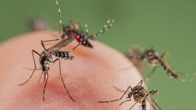 या देशी उपायांचा करा अवलंब आणि मच्छरांपासून स्वत:ला वाचवा; ओव्याची 'ही' 'ट्रिक वापरल्यास मच्छर औषधालाही शिल्लक राहणार नाहीत