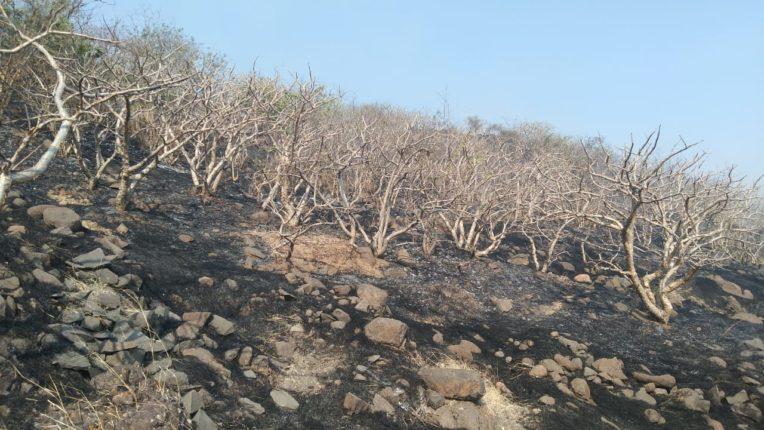 सोळशी डोंगरावरील वनसंपदा जळून खाक ; पशुपक्षांची घरटी, अंडी, सरपटणारे जीव व जनावरांचा चारा जळाला